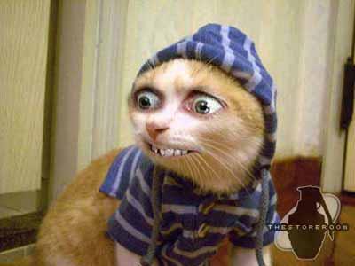 http://www.modrykocour.cz/funnyphotos/cat2.jpg