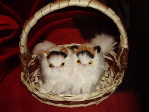 Název: Přátelská koťátka / Vystavovatel: Maxík