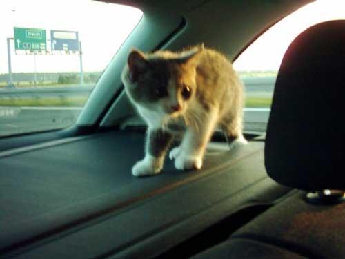 Takhle pod dohledem cestovala Kitty :-)