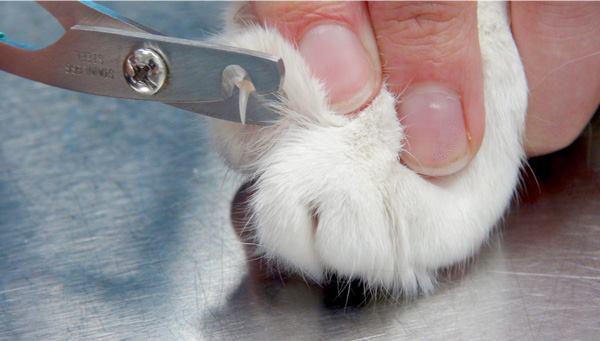 Třepení drápků u koček