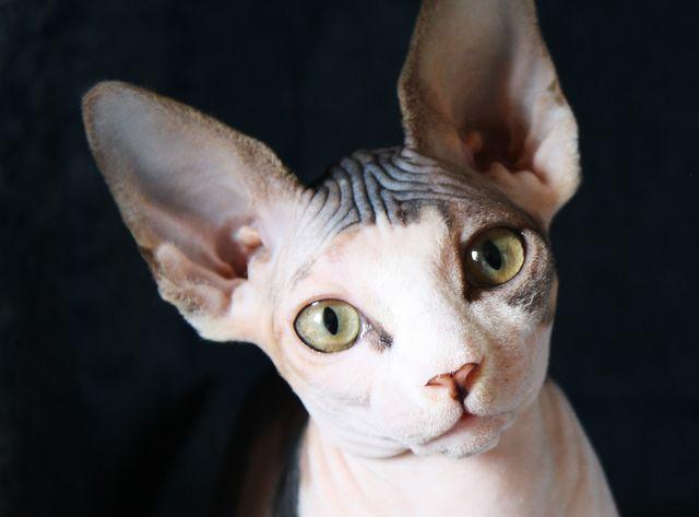 bezsrstá kočička fotky dospělí muži gay porno