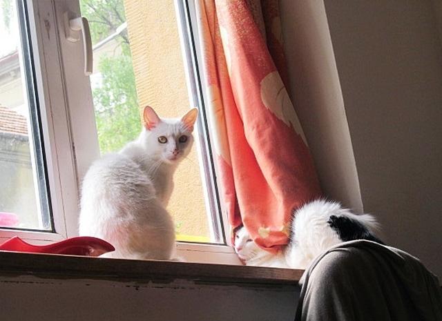 mladá sladká mačička pics
