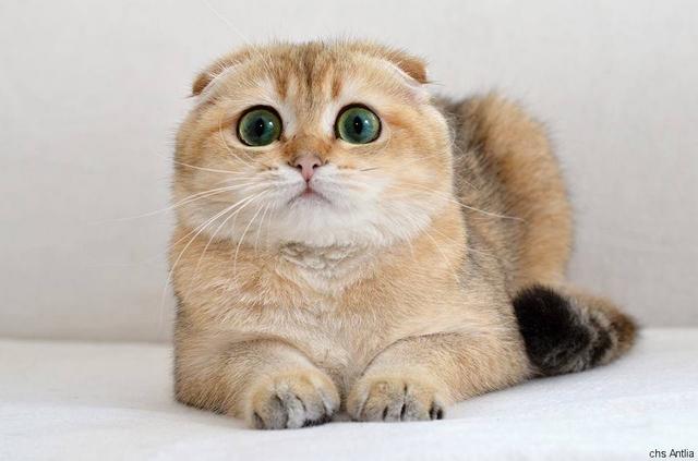 velmi těsná kočička