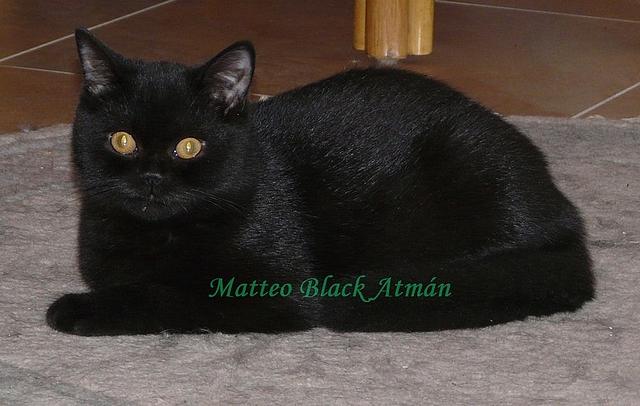 Ohromující černá kočička
